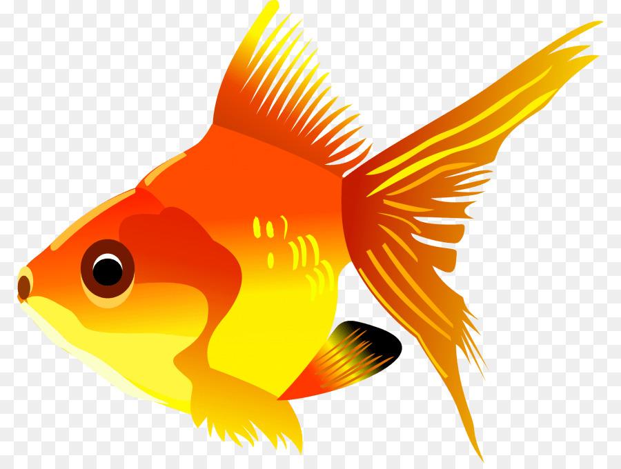 Goldfish Shower Curtain Clipart Common Lionhead Koi