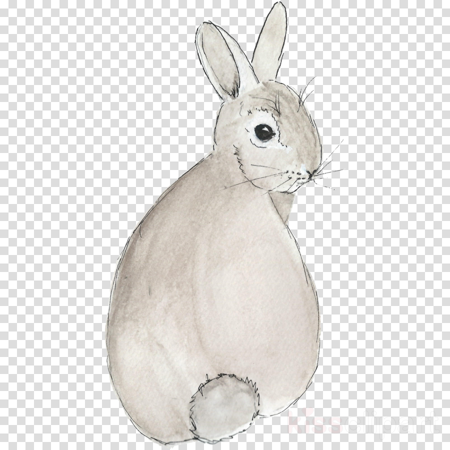 Hare clipart Domestic rabbit Hare Easter Bunny