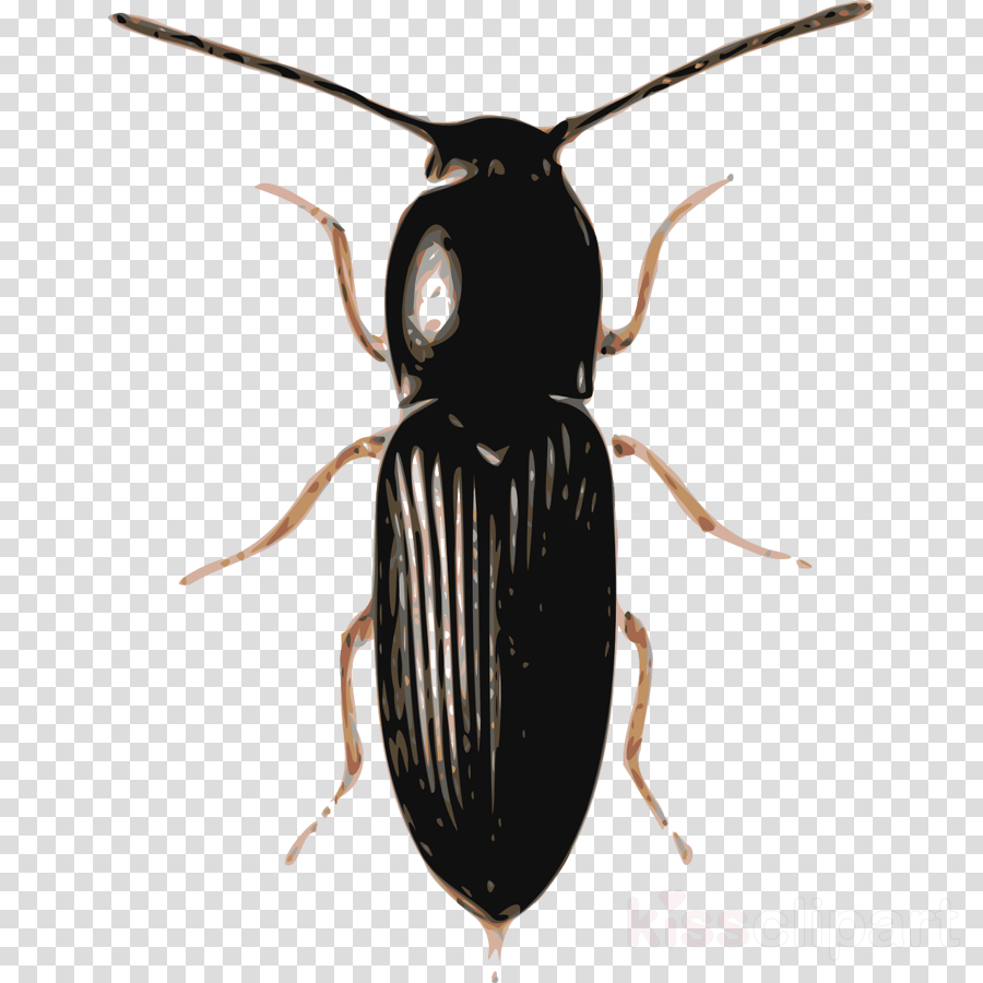beetle insect clipart Stag beetle Rhinoceros beetles