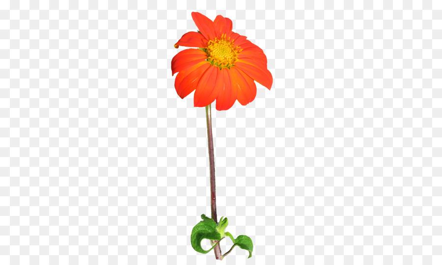 Common daisy clipart Common daisy Plant stem Flower