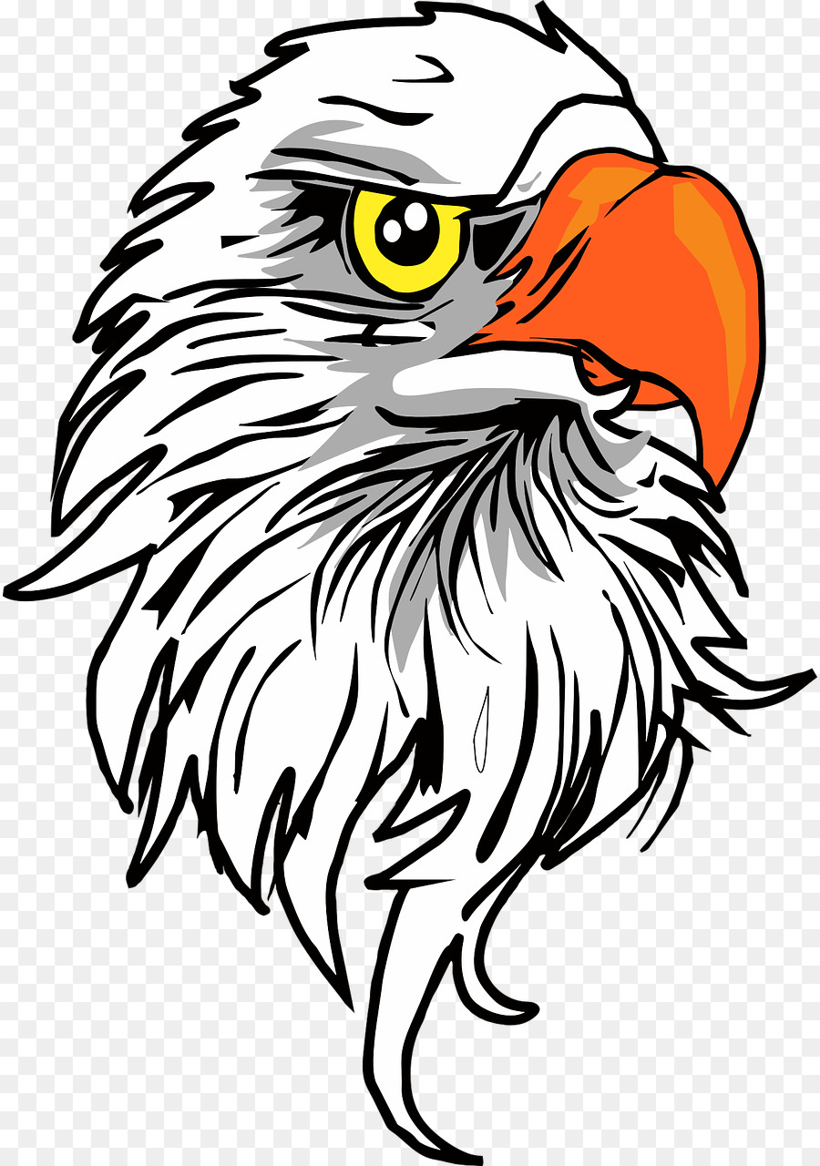 eagle head png clipart Bald eagle