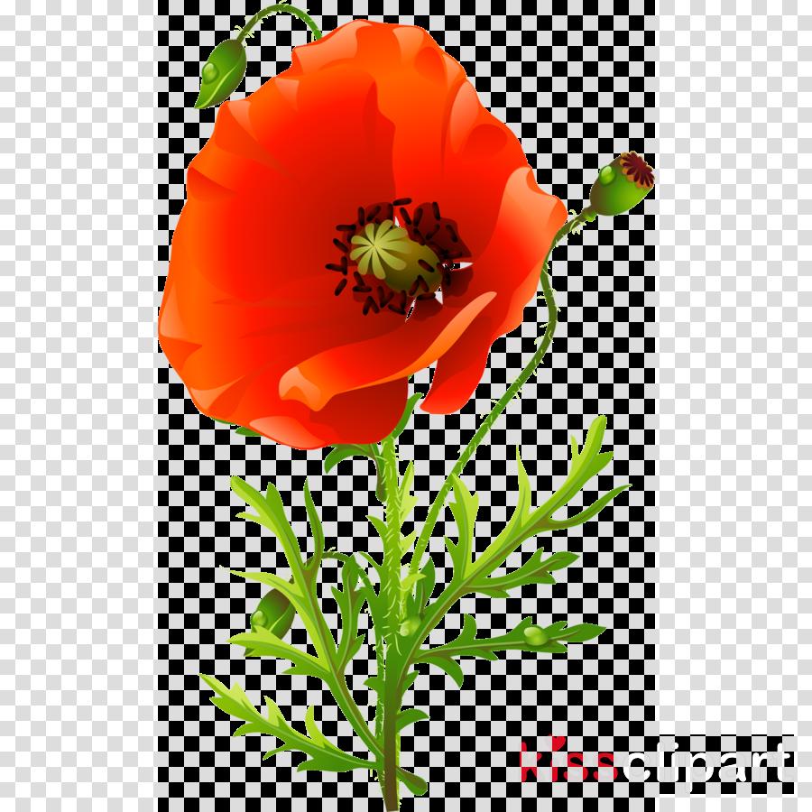 Flower Orange Poppy Transparent Png Image Clipart Free Download