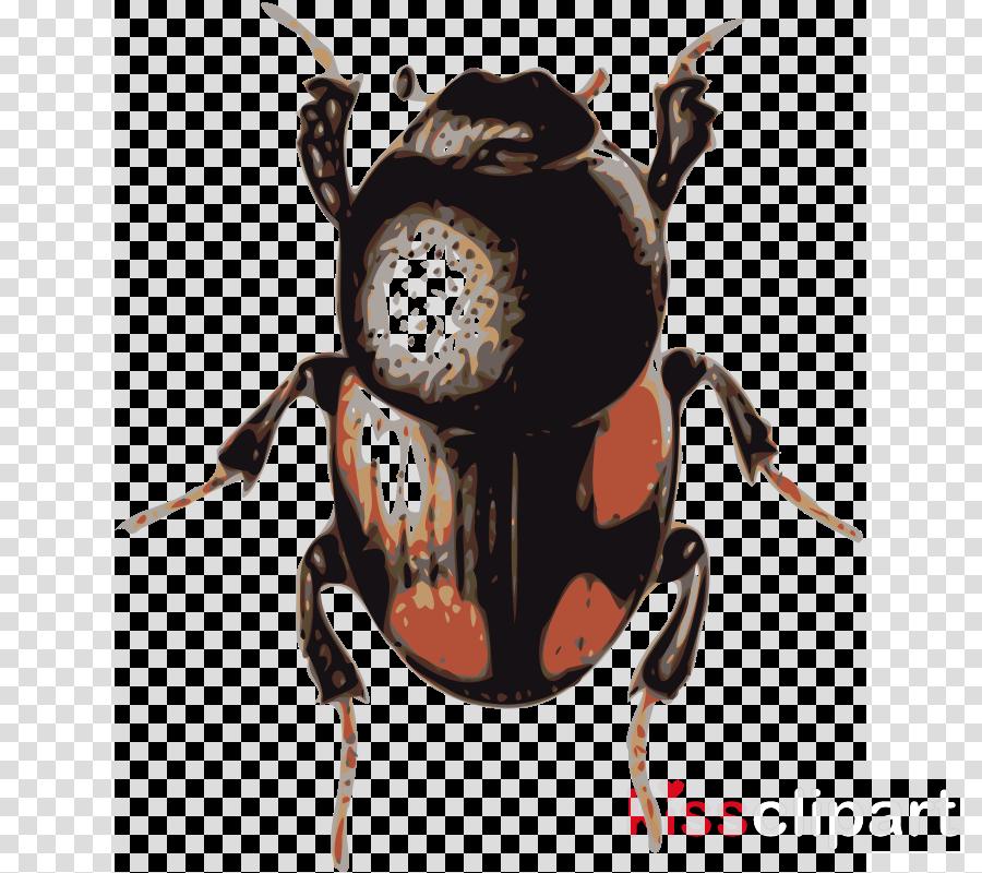 beetle (caccobius) clipart Beetle Caccobius