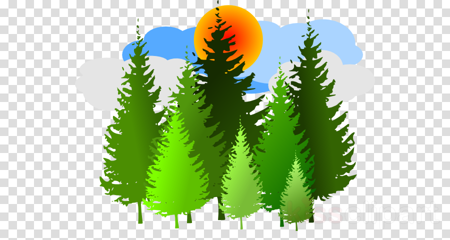 coniferous forest clipart Forest Trees Clip art