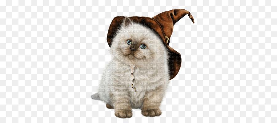 Cat clipart Siberian cat Birman Kitten