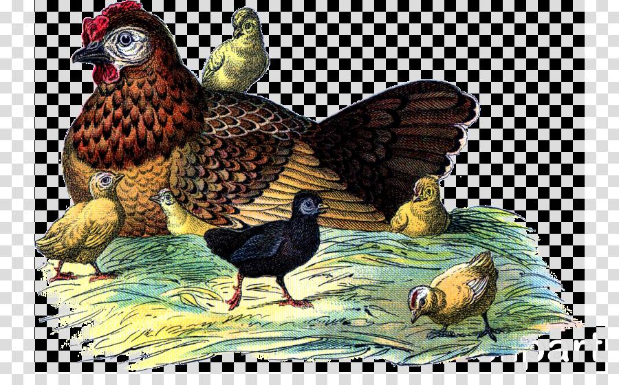 egg lady clipart Chicken Egg Duck