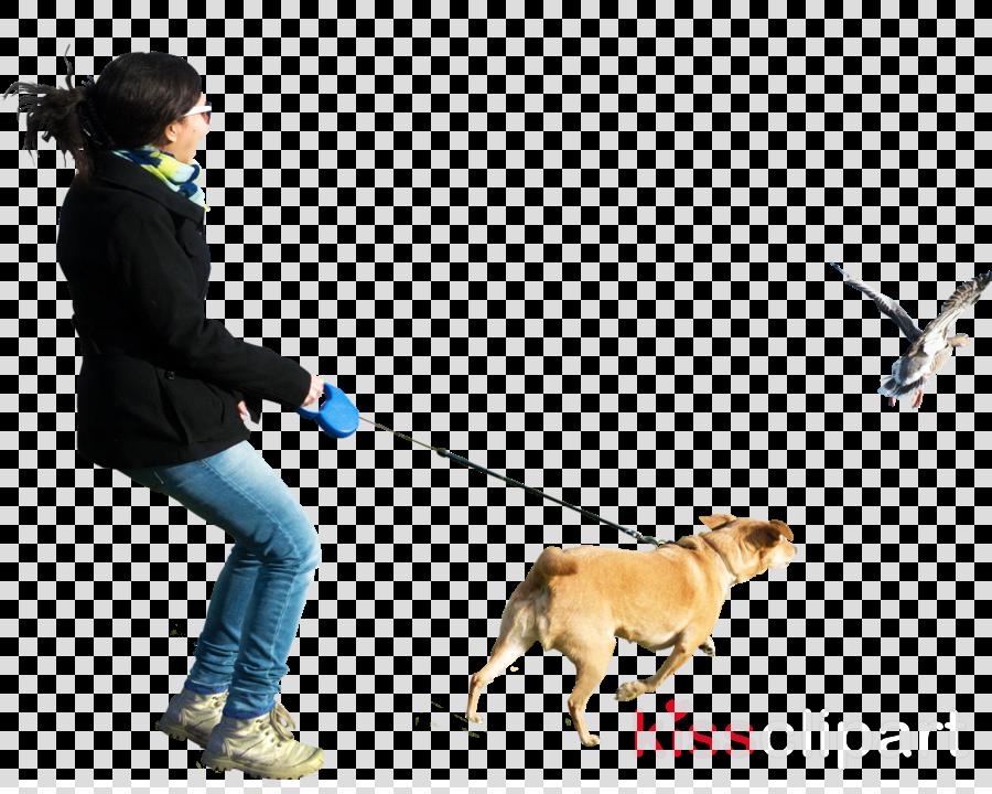 person walking dog png clipart Dogo Argentino Presa Canario