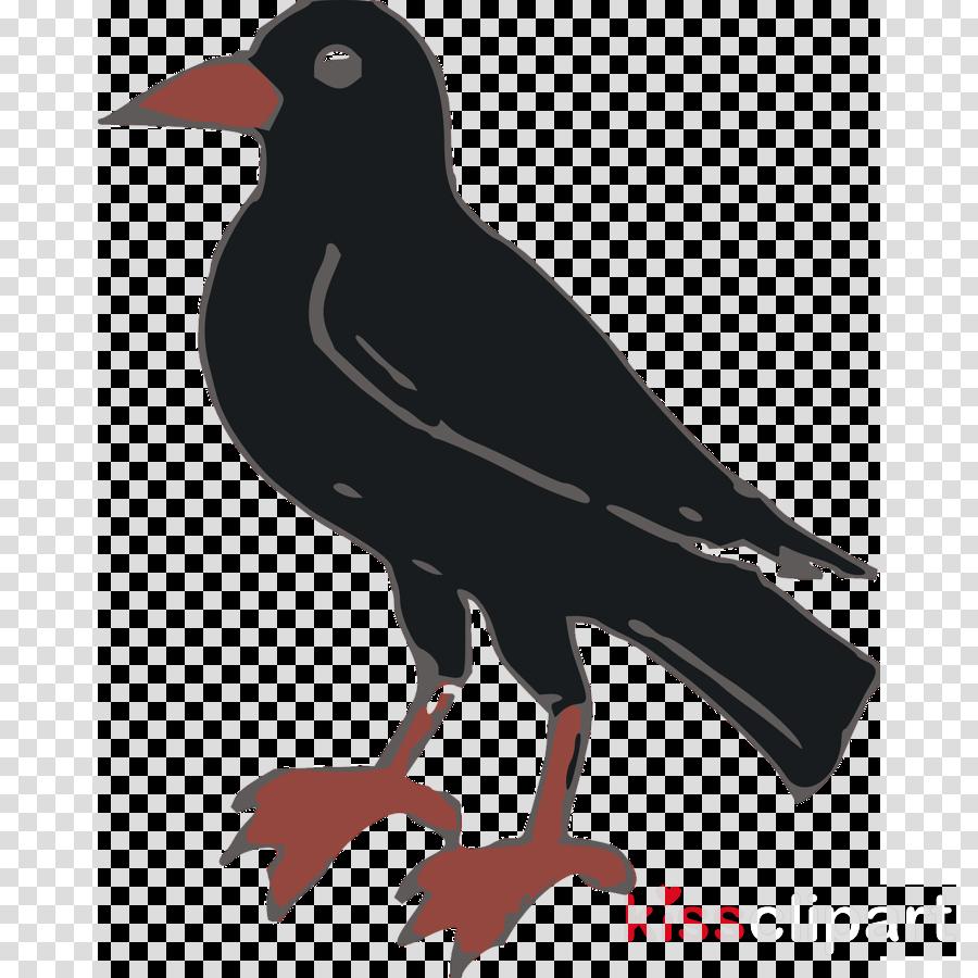 crow clip art clipart Crow Common raven Clip art