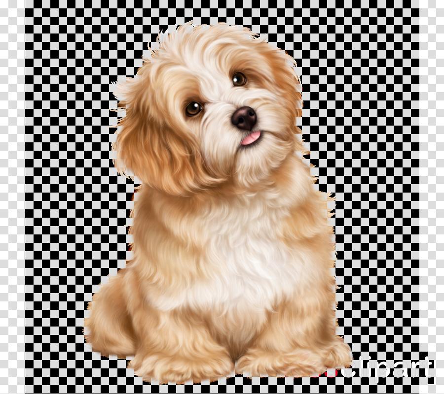 прекрасного воскресенья clipart Royalty-free Puppy Cavapoo