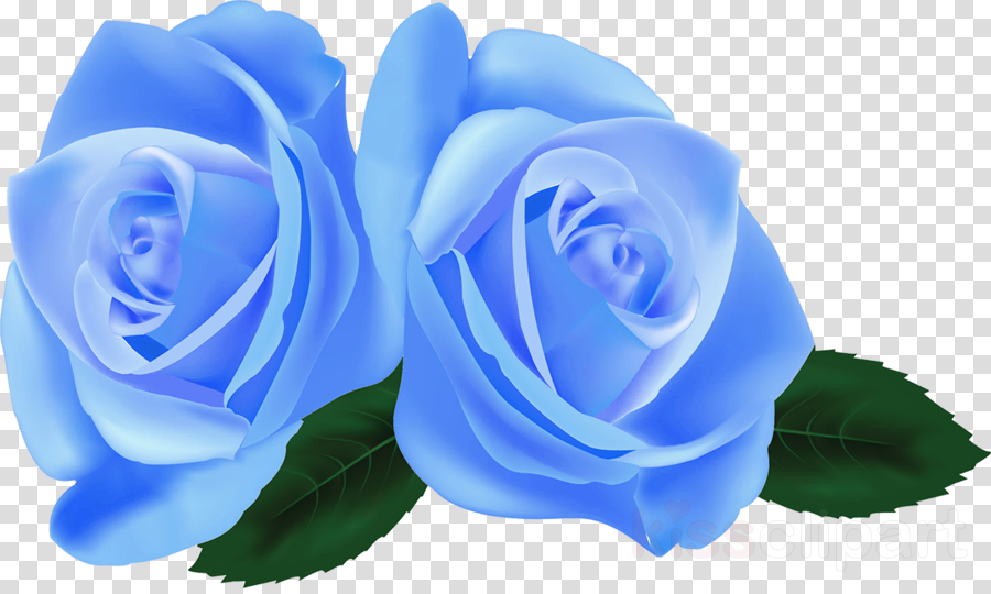 Blue Rose Flower Transparent Png Image Clipart Free Download