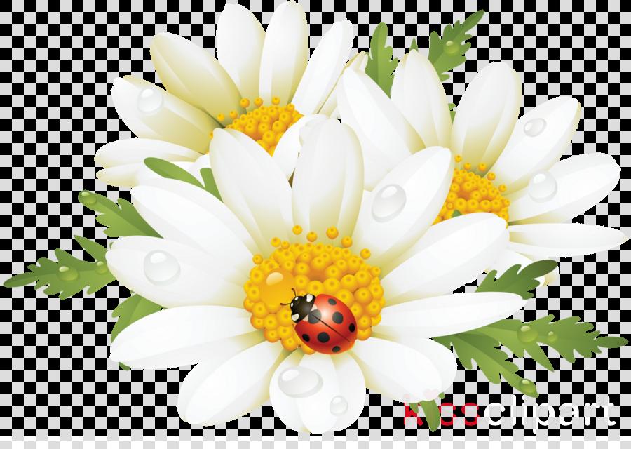 summer flowers png clipart Flower Clip art
