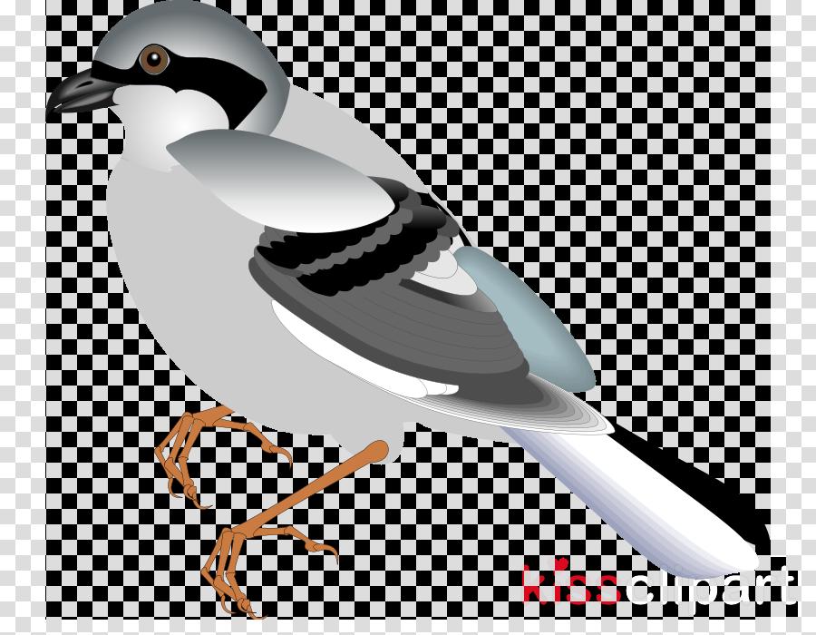 Bird clipart Bird Sparrow Duck
