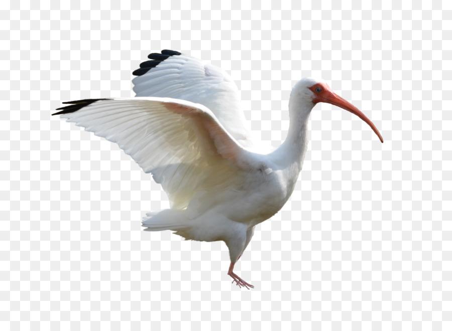 Crane Bird clipart - Bird, Animal, Feather, transparent clip art