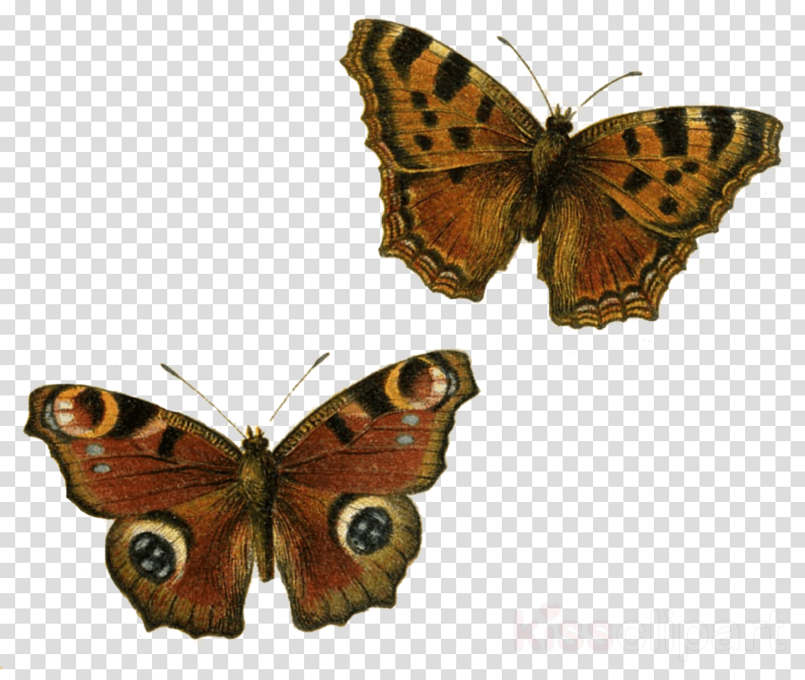 transparent butterfly clipart Butterfly Clip art