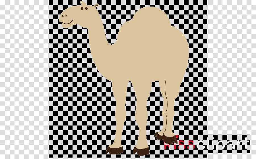 Camel clipart Bactrian camel Clip art