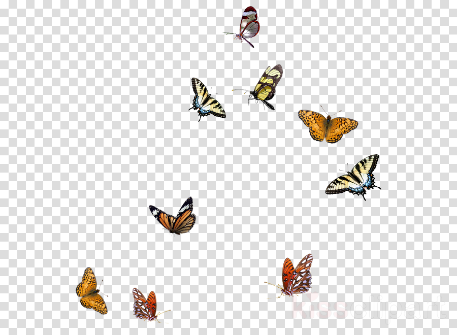 transparent butterfly border clipart Insect Butterfly & Moth Clip art