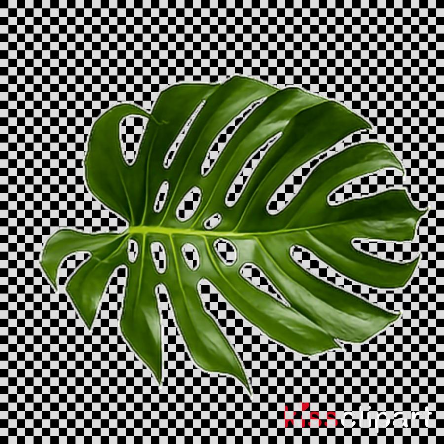 Leaf Green Vegetable Transparent Png Image Amp Clipart