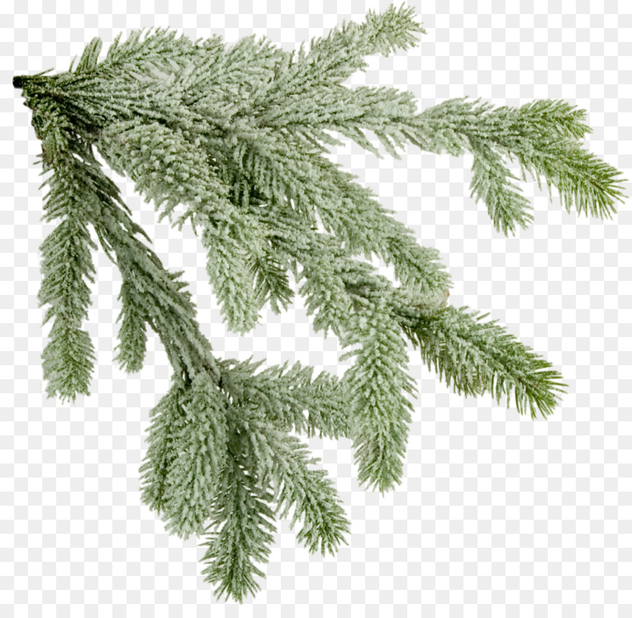Christmas Branch Png.Christmas Tree Branch Clipart Pine Tree Leaf