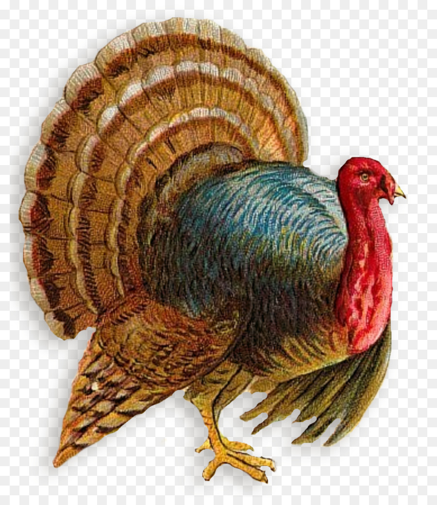 Turkey meat clipart Broad Breasted White turkey Black turkey Turkey meat