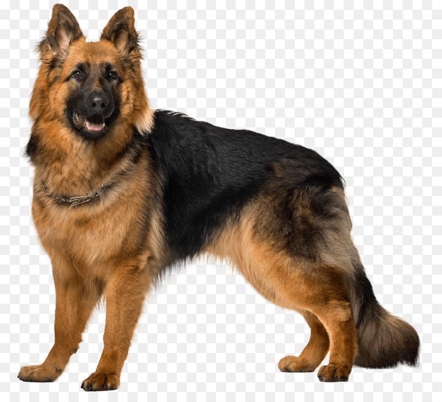 german shepherd dog black png clipart Old German Shepherd Dog Puppy