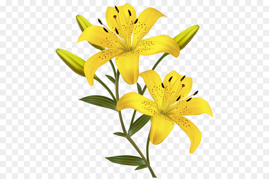 lily yellow flowers clipart Easter lily Orange lily Tiger lily