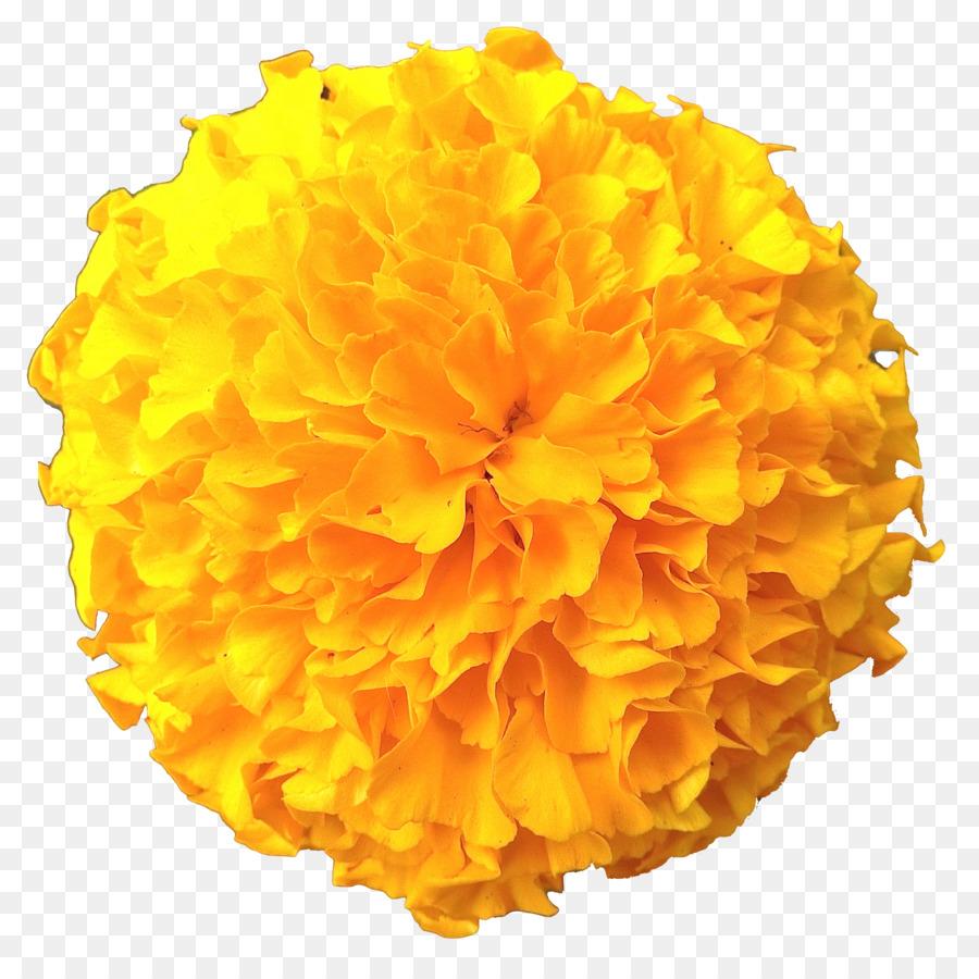 flowers clipart background clipart yellow flower orange transparent clip art flowers clipart background clipart