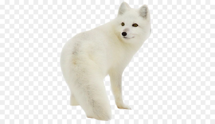 Portable Network Graphics clipart Dog breed Arctic fox
