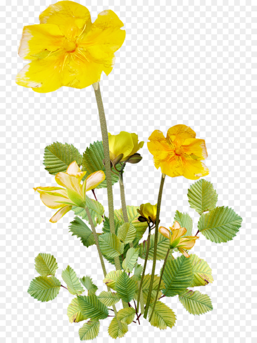 Flower Drawing Yellow Transparent Png Image Clipart Free Download