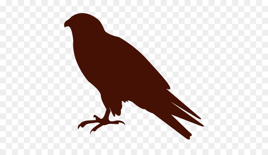 Portable Network Graphics clipart American crow Bird Common raven