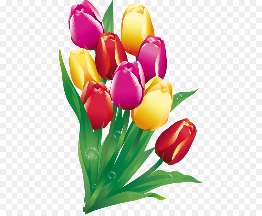 flower graphics drawing plant tulip png clipart free download