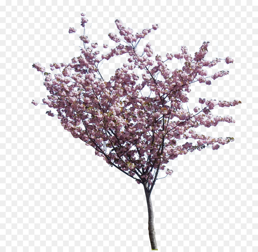 Tree Purple Plant Transparent Png Image Clipart Free Download