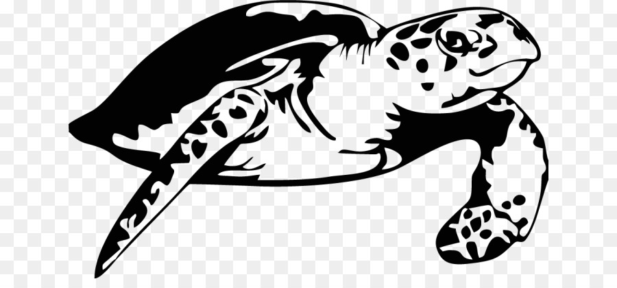 Turtle Tshirt Sea Transparent Image Clipart Free Download