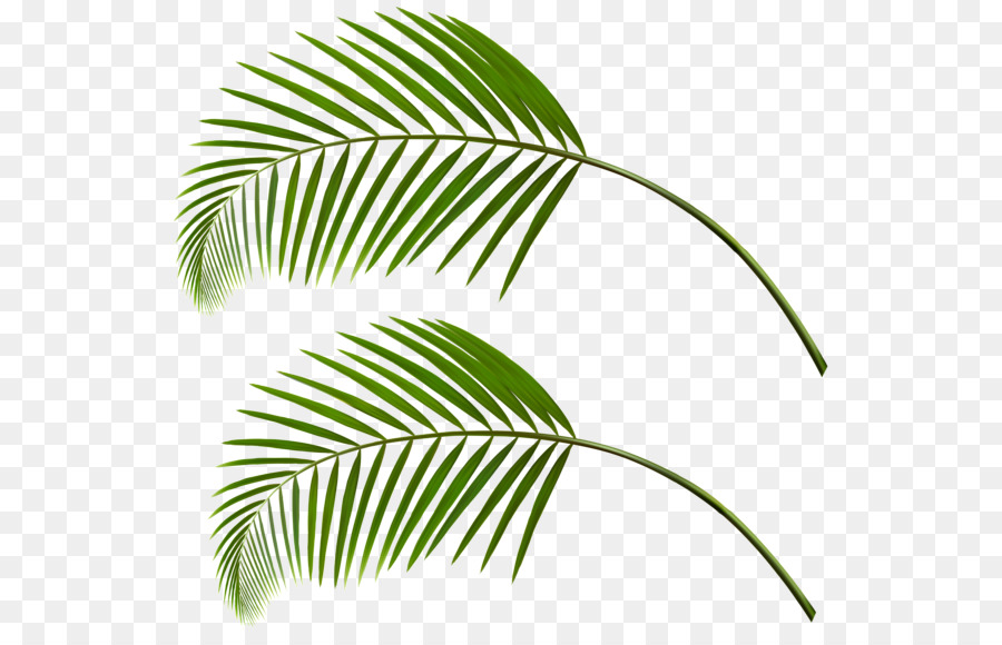 Palm Tree Drawing Clipart Leaf Green Plant Transparent Clip Art