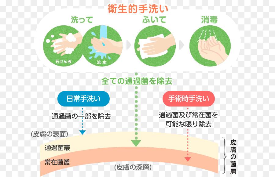 「皮膚の菌層 手洗い」の画像検索結果