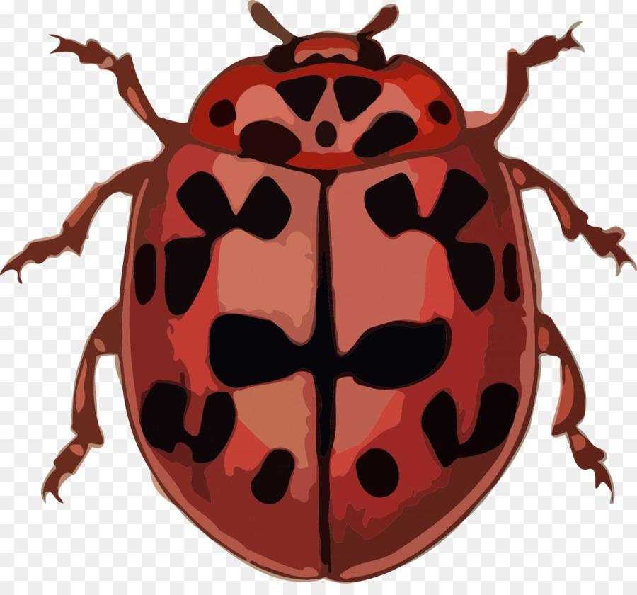 Ladybird beetle clipart Ladybird beetle Scarabs Polyphaga