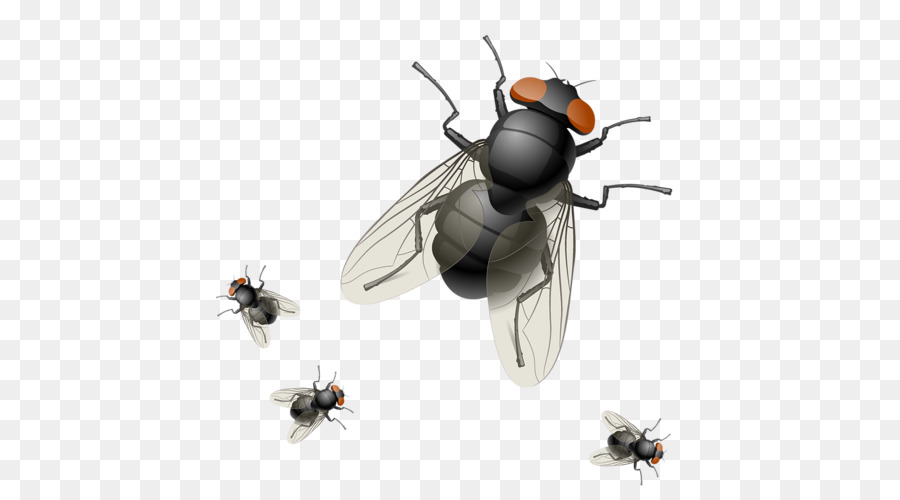 mosca vector clipart Insect Clip art