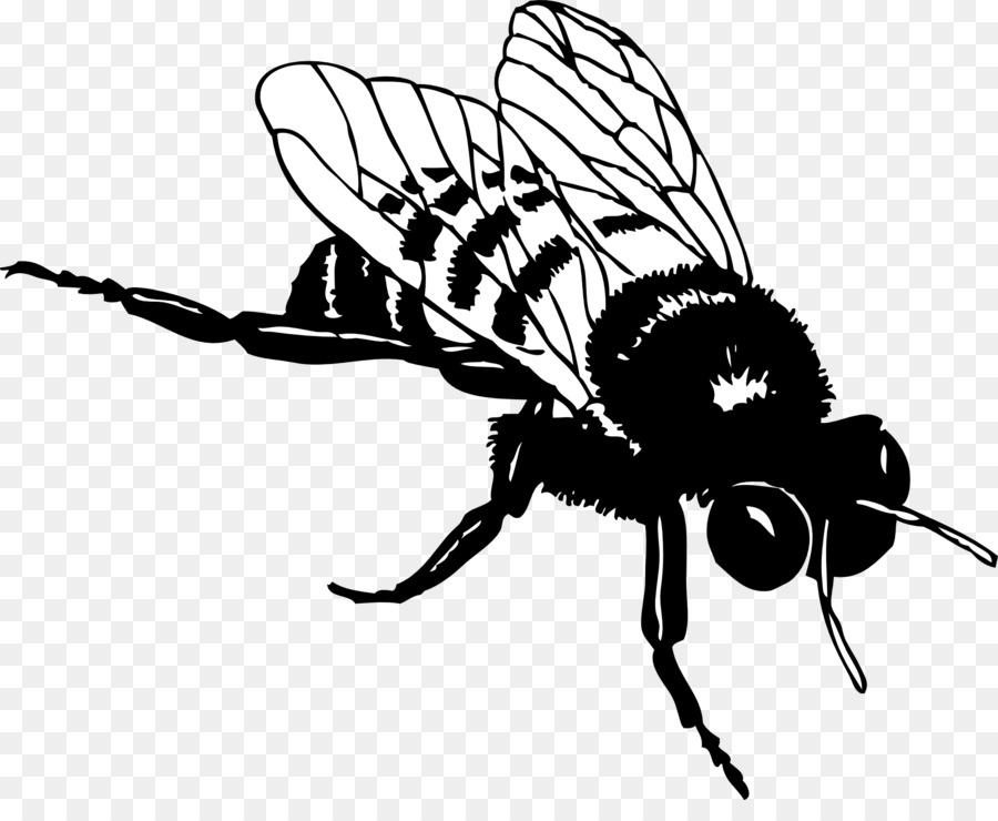Bee Design Wing Transparent Image Clipart Free Download