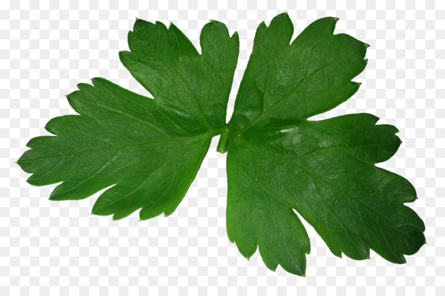 parsley png clipart Parsley Food