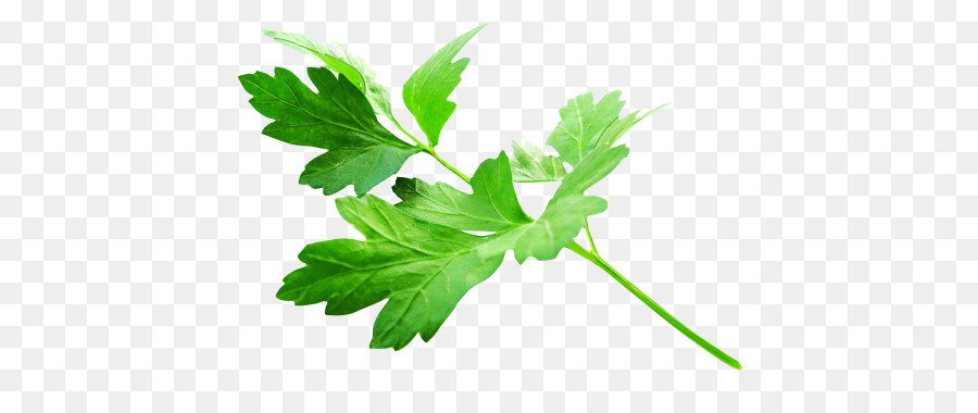 parsley png clipart Parsley Chili con carne Vegetarian cuisine