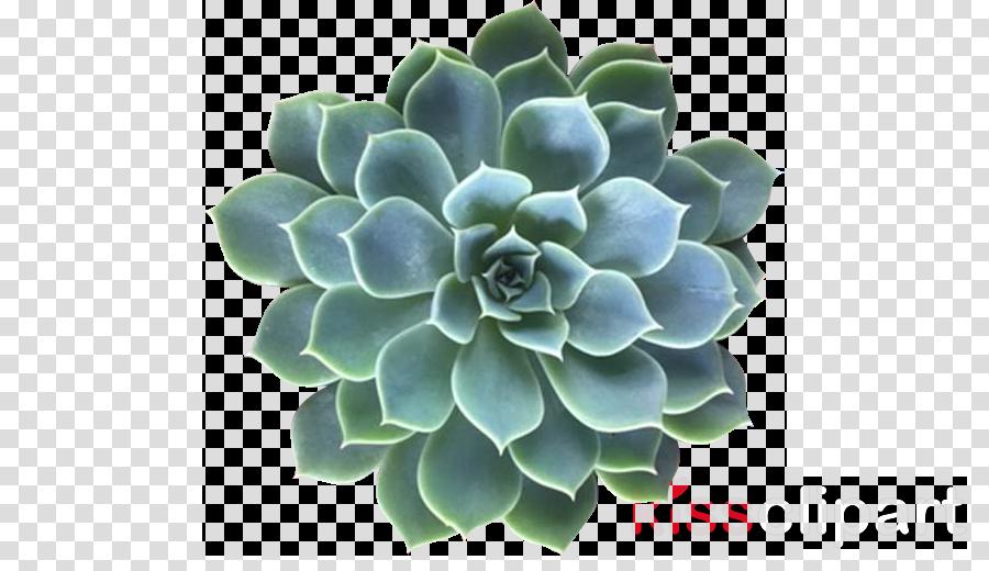flower garden clipart cactus garden plant transparent clip art cactus garden plant transparent clip art