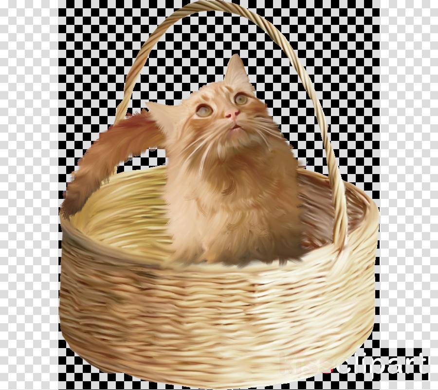 корзина для котят картинки исключение может быть