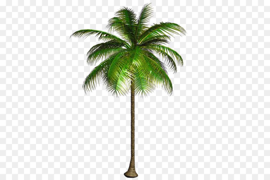 Tree clipart Tree Coconut