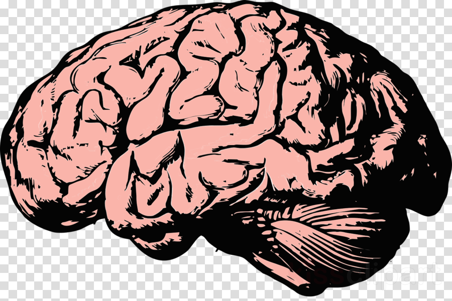 mind png clipart Brain Mind