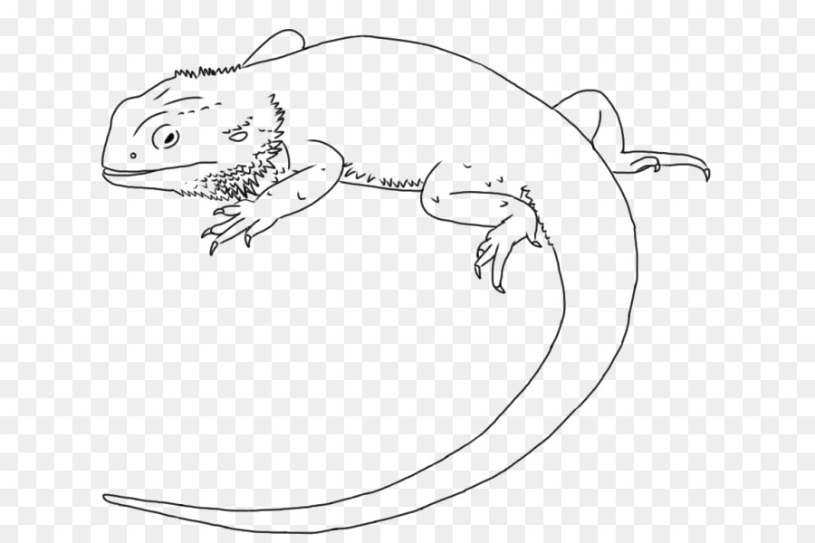 Lizard Drawing Dragon Transparent Png Image Clipart Free Download