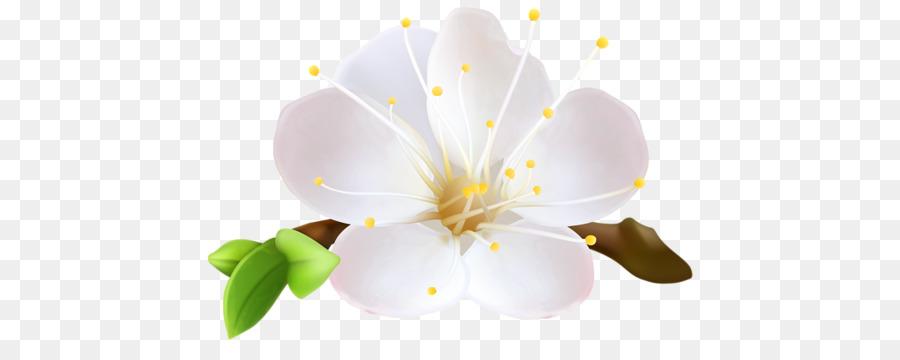 flower border clip art - Google Search | Spring flowers, Flowers, Flower  clipart