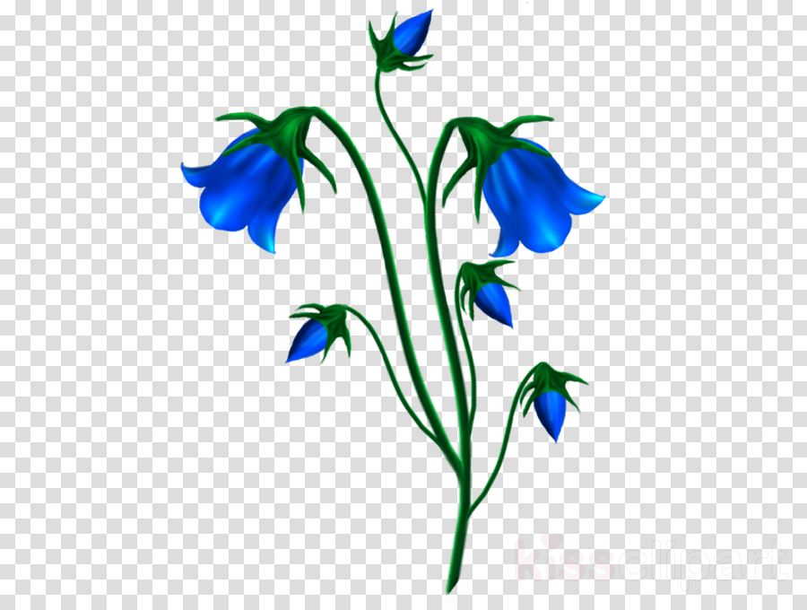 School Background Design clipart , Flower, Drawing, Plant