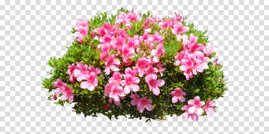 Flower Plants Png Images - Flowers Healthy