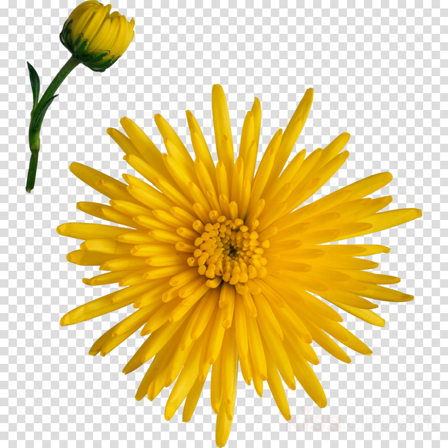 Flowers Clipart Background