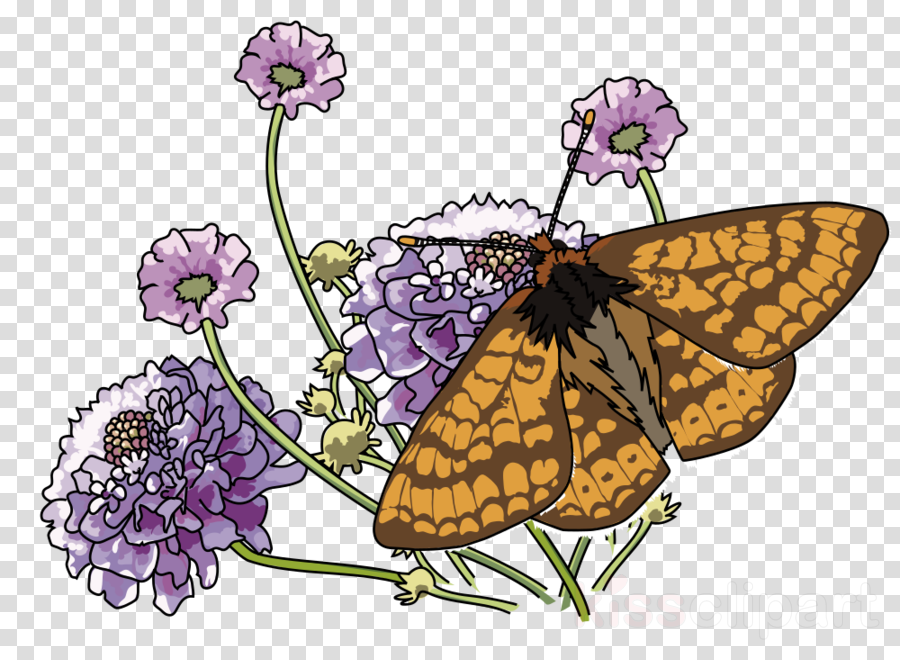 monarch butterfly and flowers twin duvet clipart Monarch butterfly Brush-footed butterflies Marsh fritillary