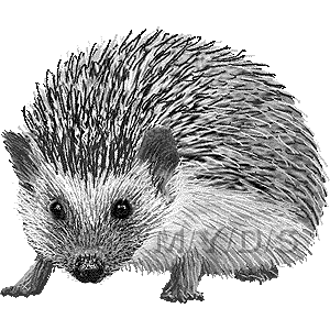 hedgehog clip art clipart Domesticated hedgehog Clip art
